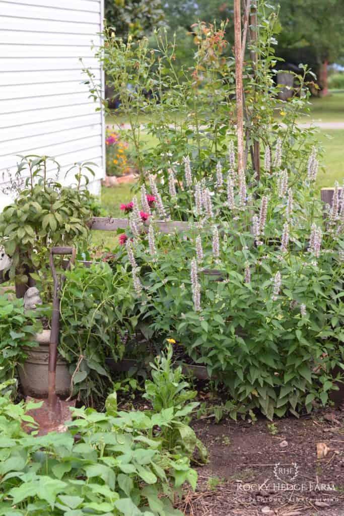 Tips on Creating a Beautiful Garden Design