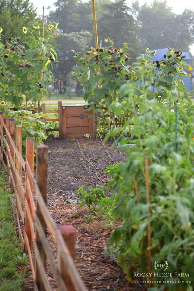 Mulching a Garden Walkway Path