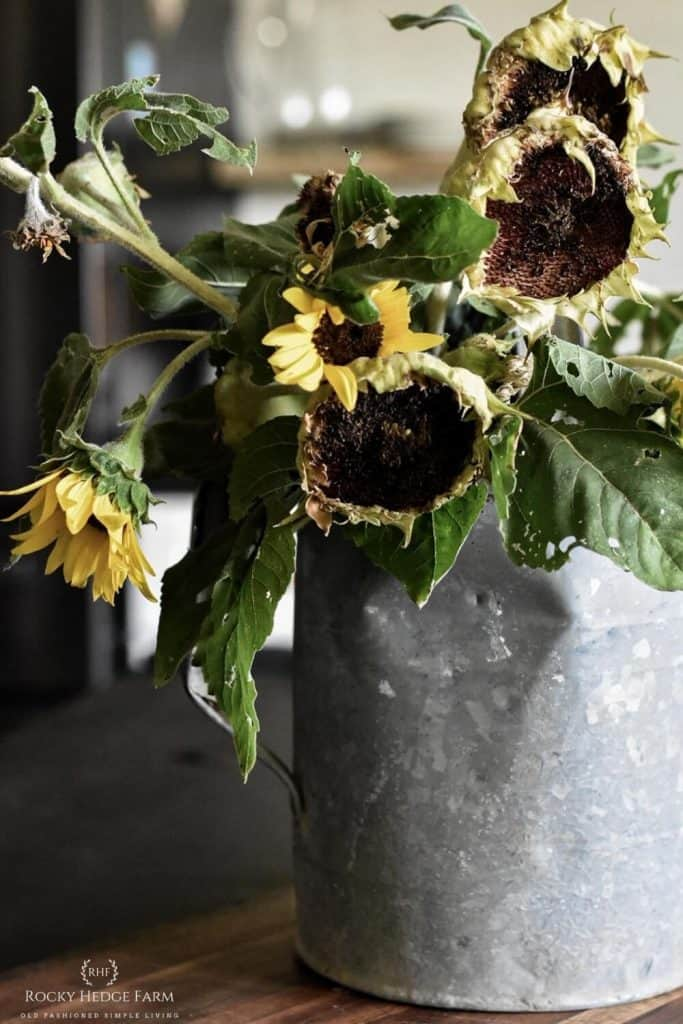 How to Dry Sunflower Heads