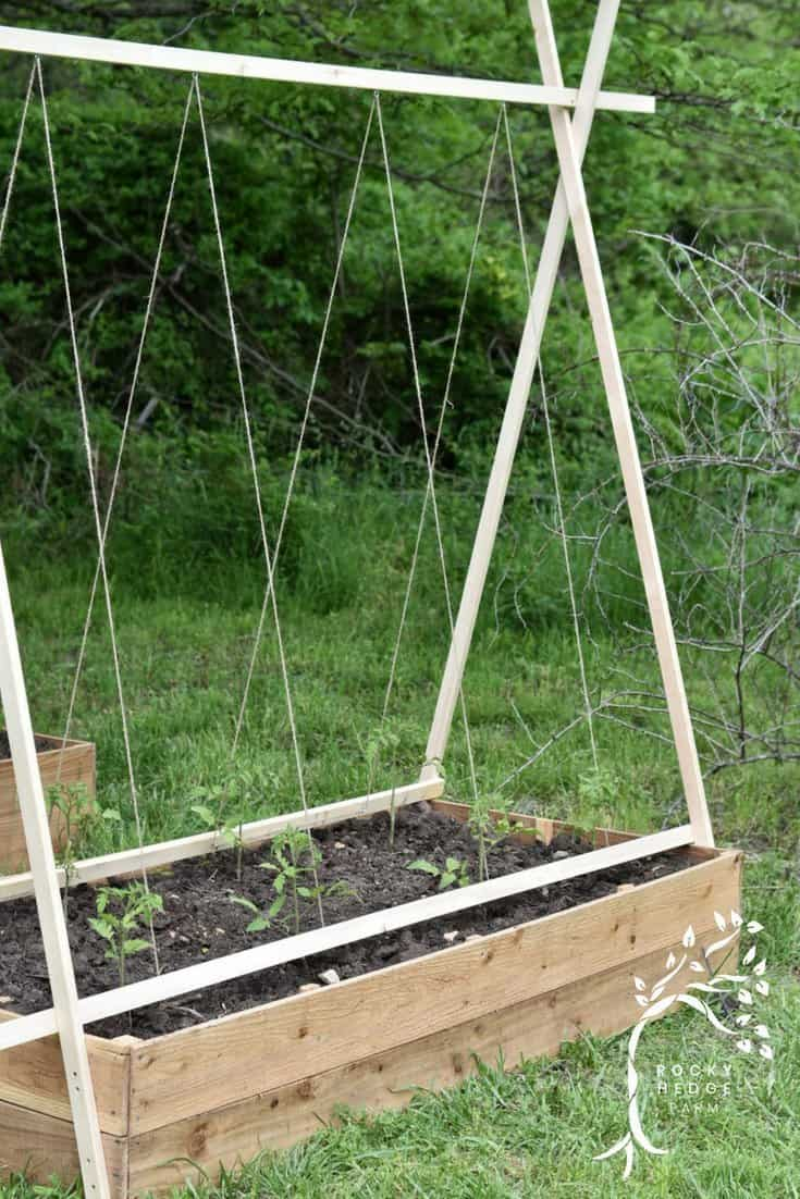 Easy Diy String Tomato Trellis Rocky Hedge Farm
