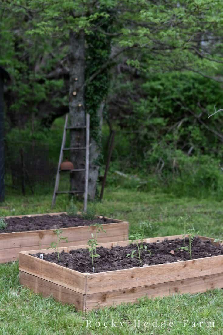 DIY Cheap Vegetable Garden Beds