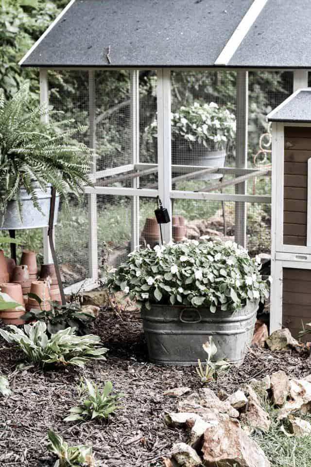 Low Maintenance Shade Garden Perennials