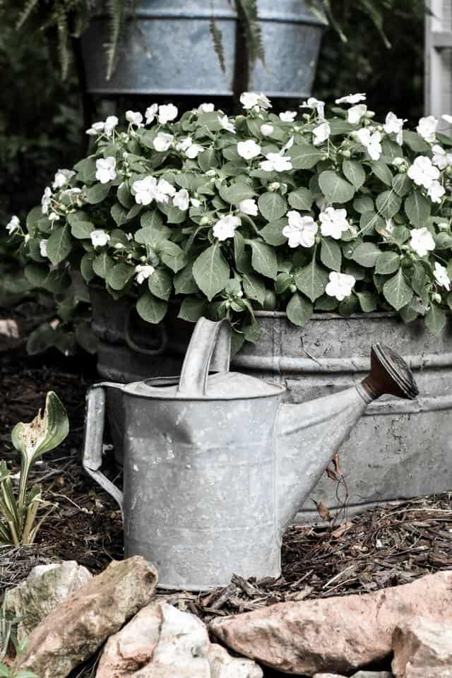 Best Shade Annual Plants that are Low Maintenance