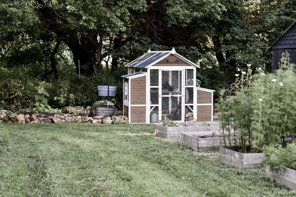Chicken Coop Landscape Ideas