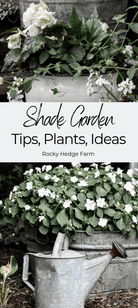 Tips, Plants and Ideas for the Shade Garden