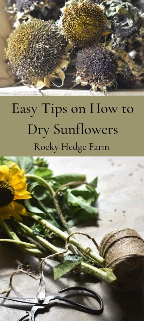 Easy Tips on How to Dry Sunflowers