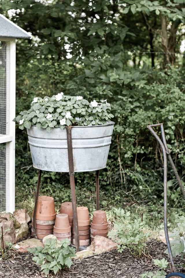 Landscaping Around the Chicken Coop Using Galvanized Garden Containers