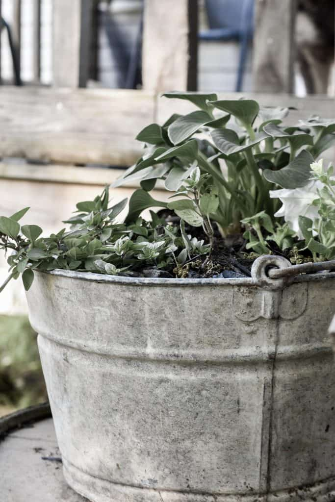 Low Maintenance Shade Container Plants