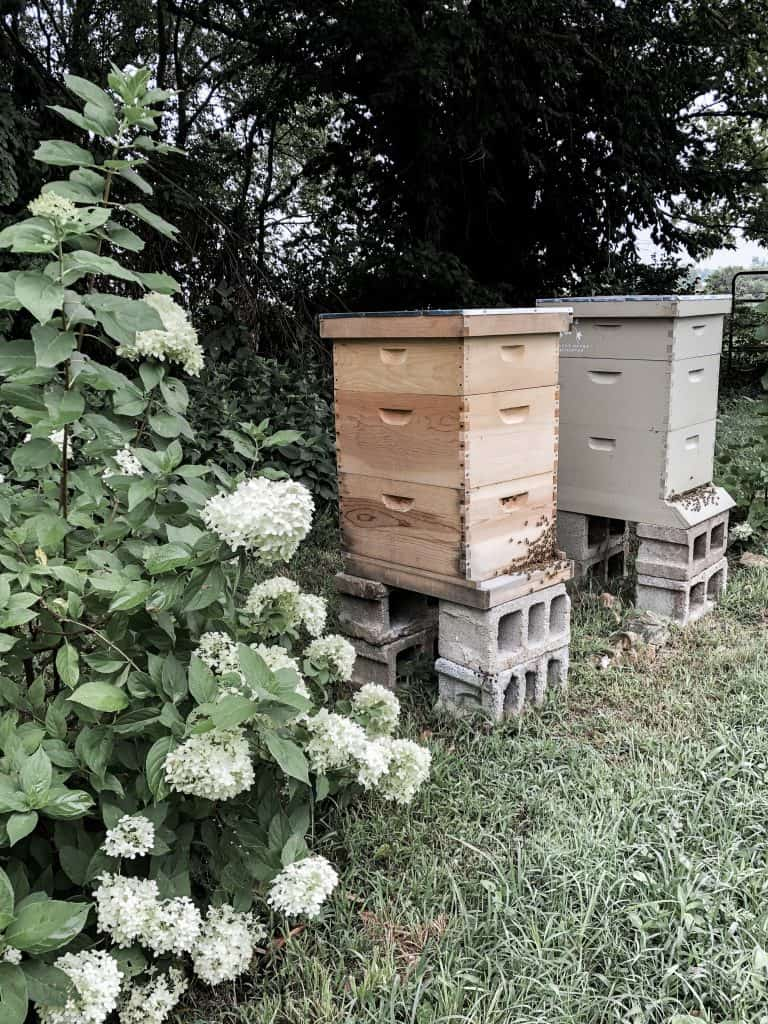Questions You Should Ask Before Getting Bees