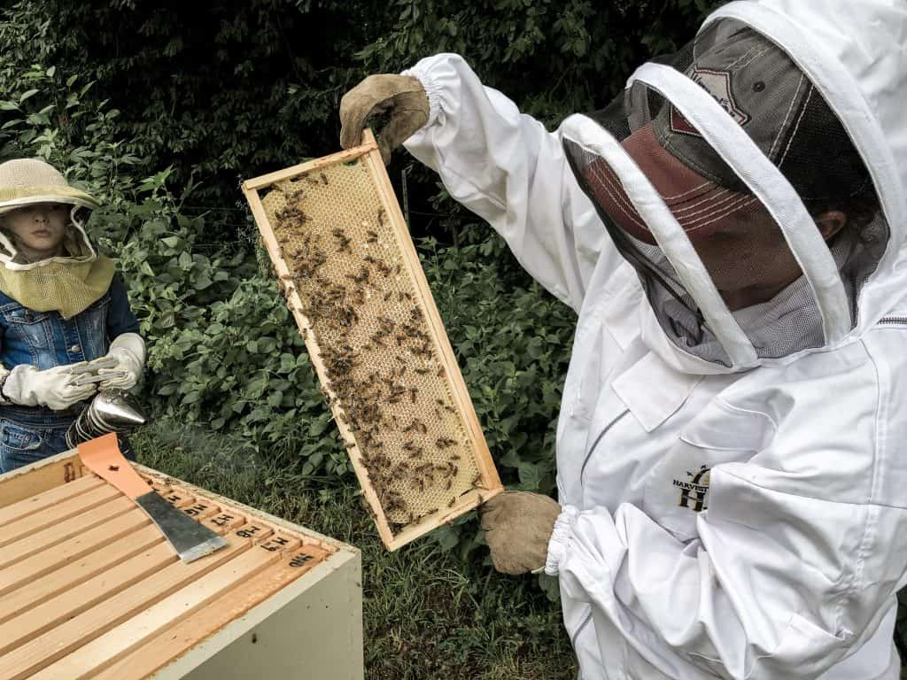 Best Beekeeping Questions for the Backyard Beginner