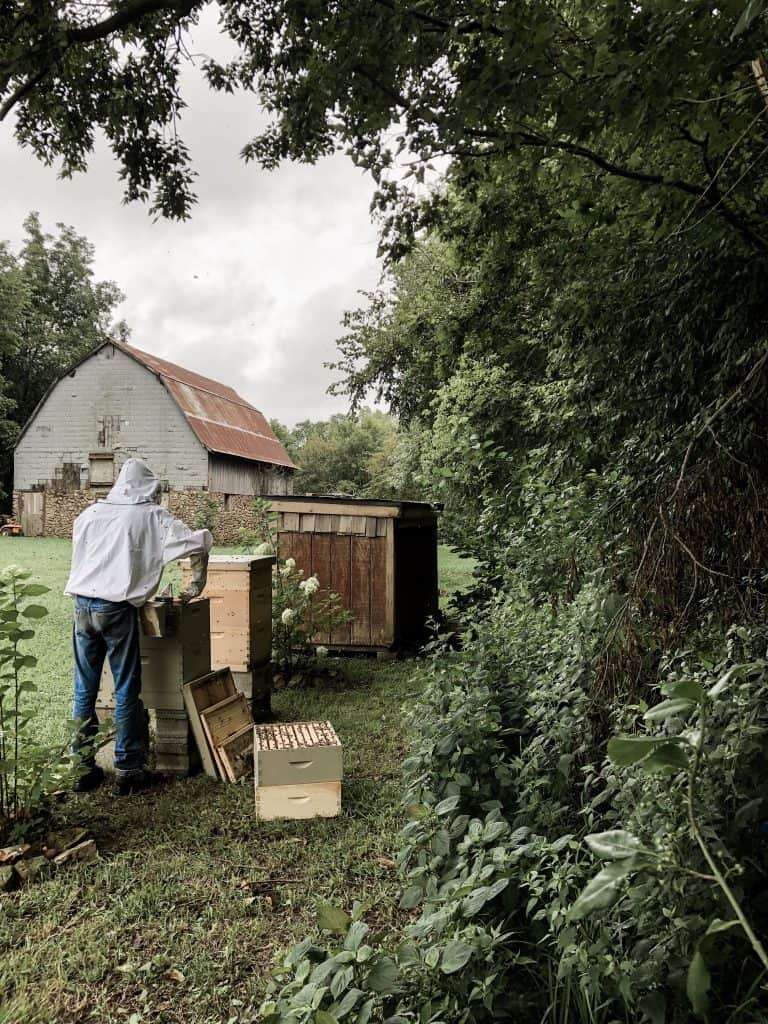 What is the Best Location for Beehives? Plus, other questions to ask for the backyard beekeeper.