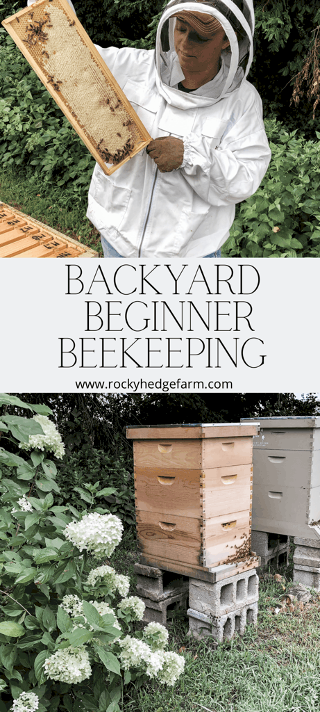 Backyard Beekeeping for Beginners - Ask Yourself These Questions Before You Get Bees
