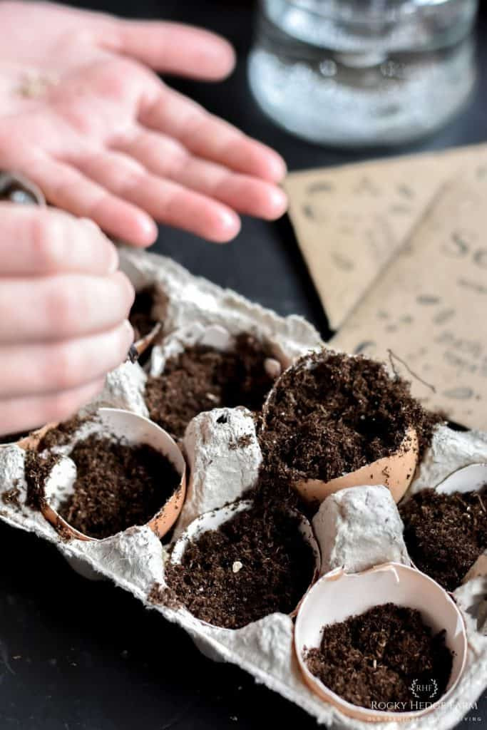Starting Seeds in Eggshell Cups