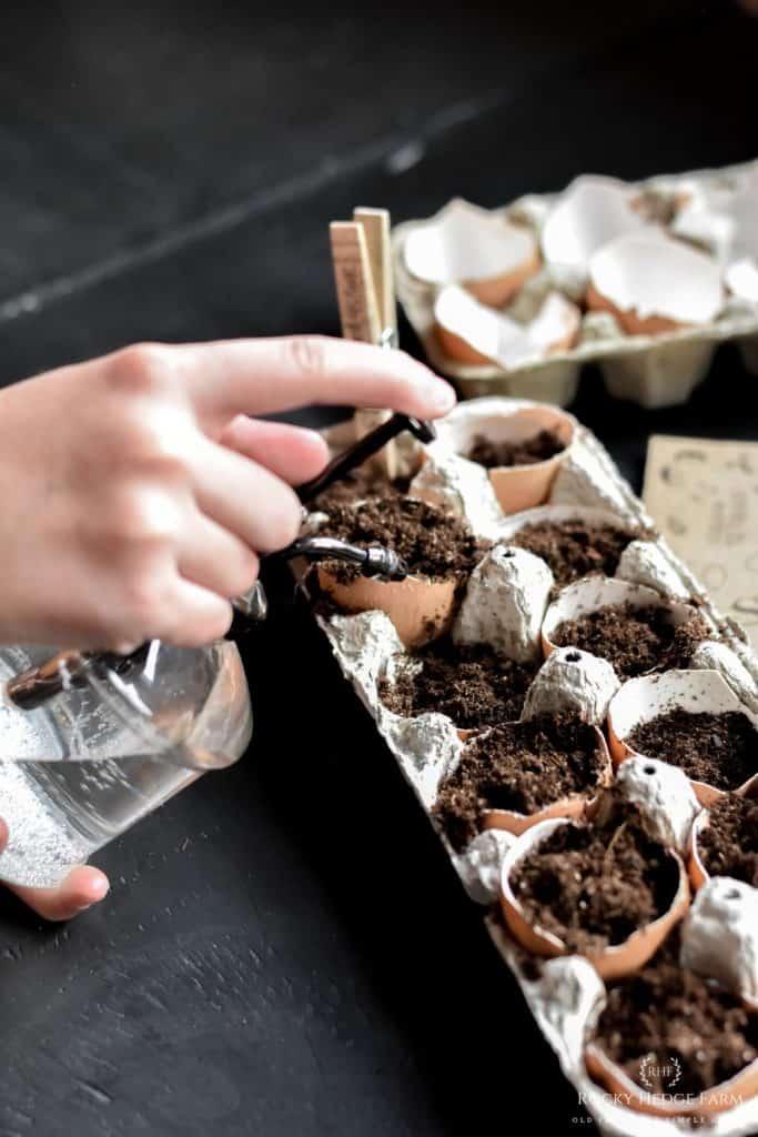 Eggshell Seed Starter