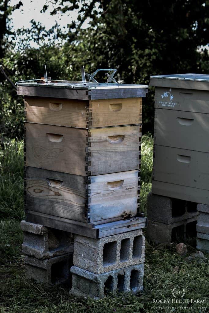 Backyard Beekeeping Apiary Aesthetic