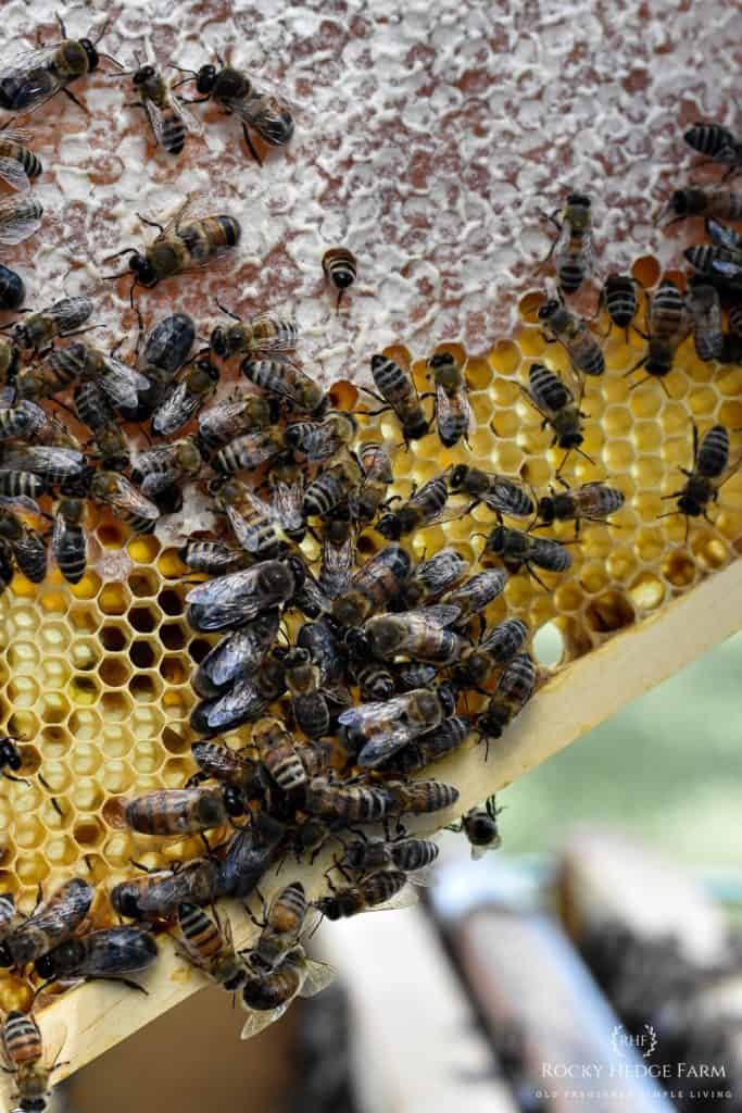 Common Beekeeping Terms for Beginners