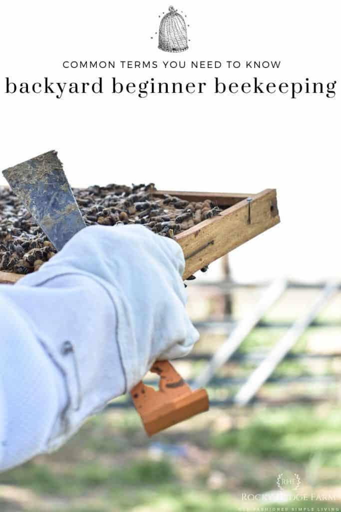 Backyard Beekeeping Terms