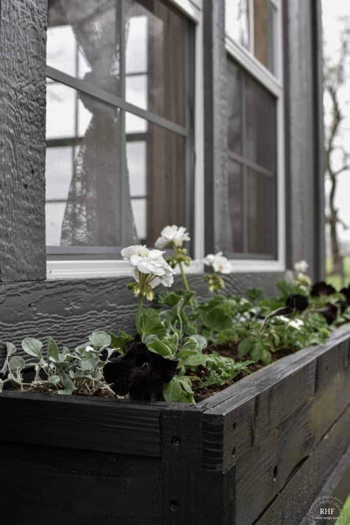 arrange window box flowers