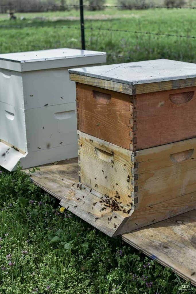 Langstroth Hive Structure