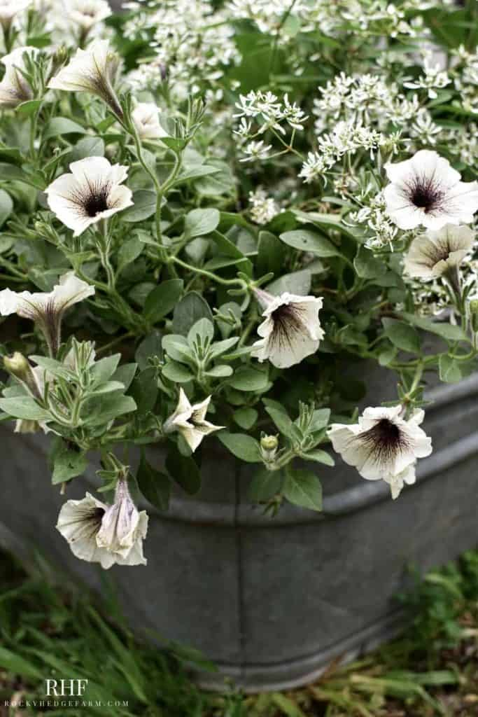 Old Wash Tub Flower