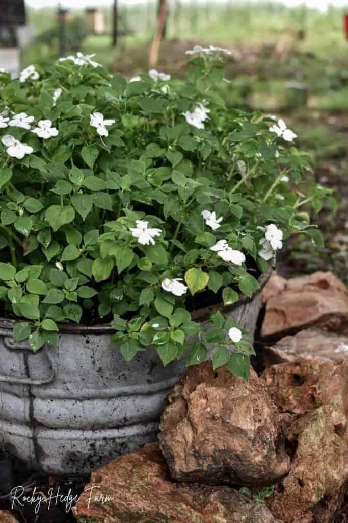 round washtub planter flowers