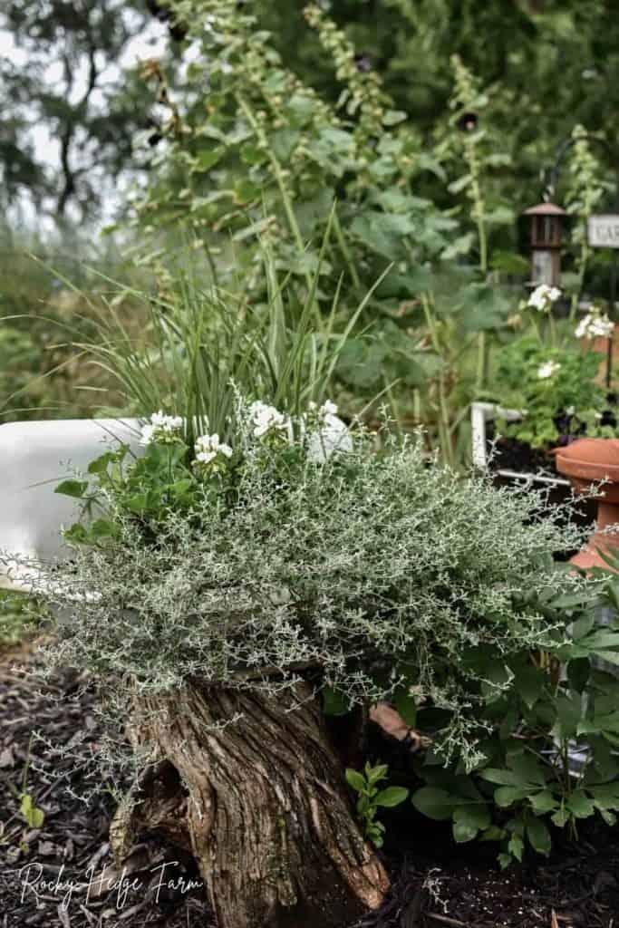 garden sink planter ideas
