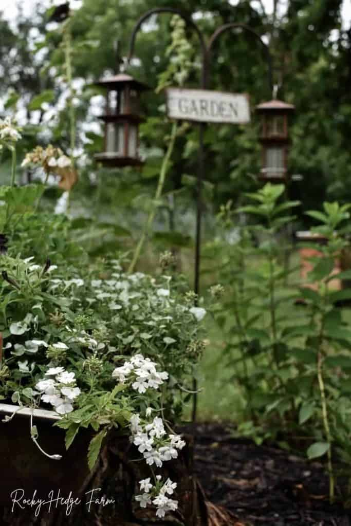 verbena in garden sink planter