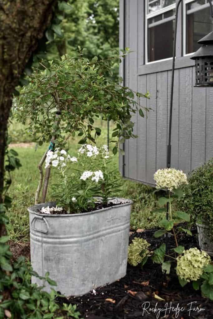 galvanized flower planter