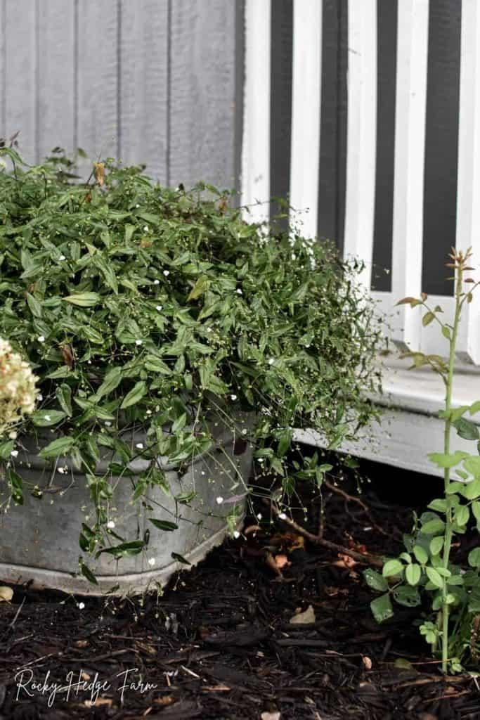 square washtub for planting flowers