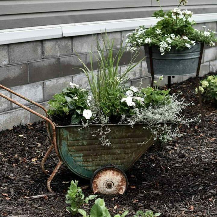 old wheelbarrow planter