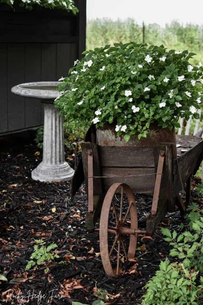 impatiens in planter wheelbarrow