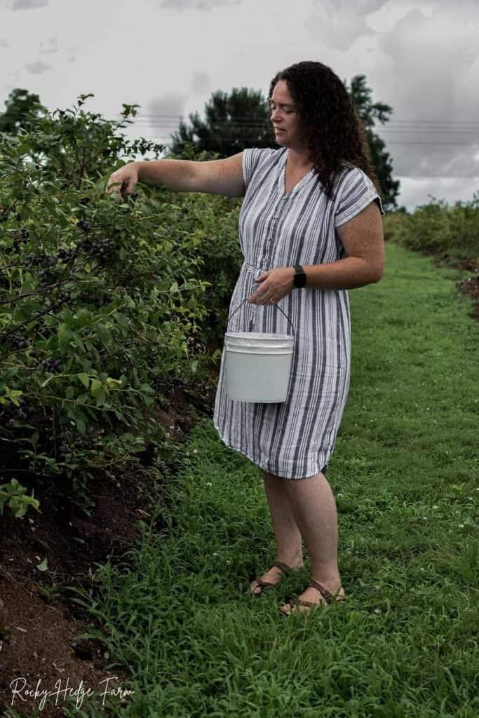 U Pick Blueberry Farm