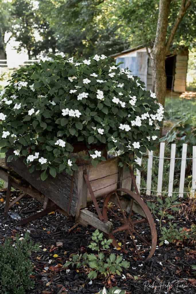 Old Wheelbarrow Planter with Impatiens