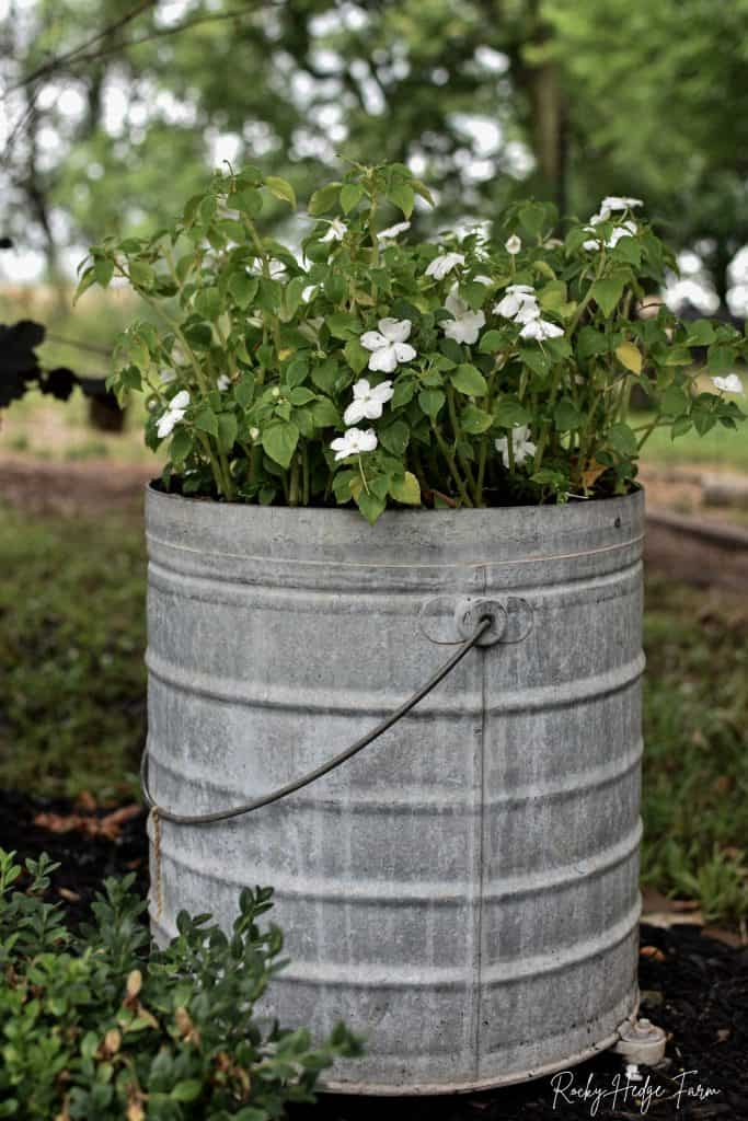 Planting Impatiens in Containers