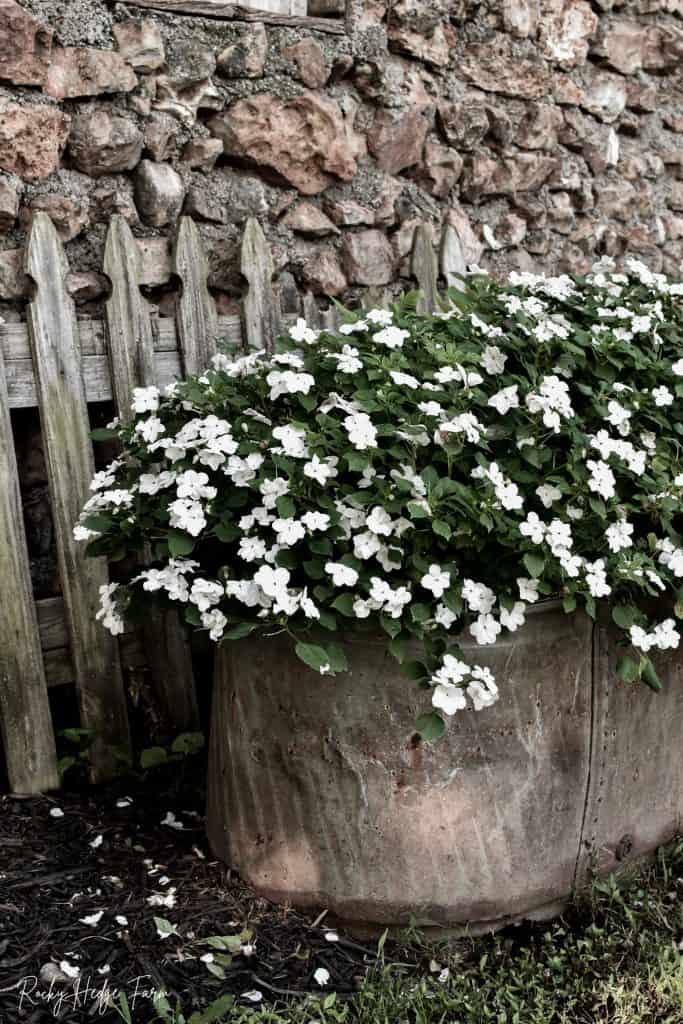 Planting Impatiens in Trough